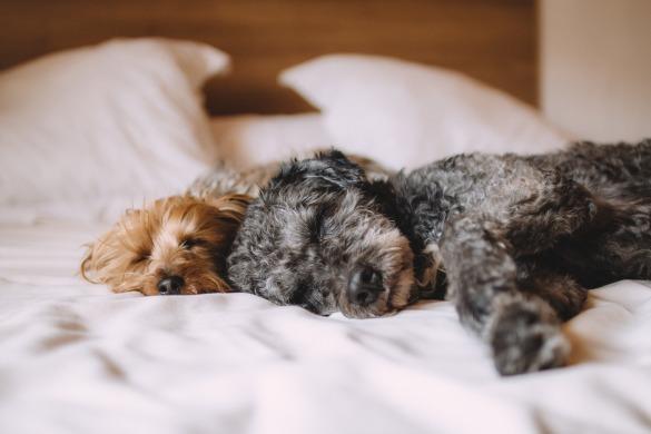 pets-bed-1284238_1920-pixabay