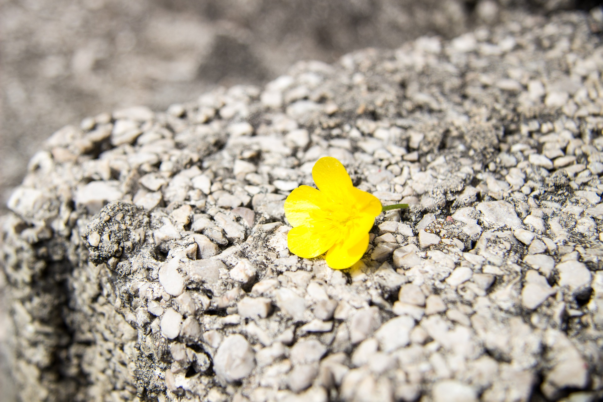 flower-1792576_1920