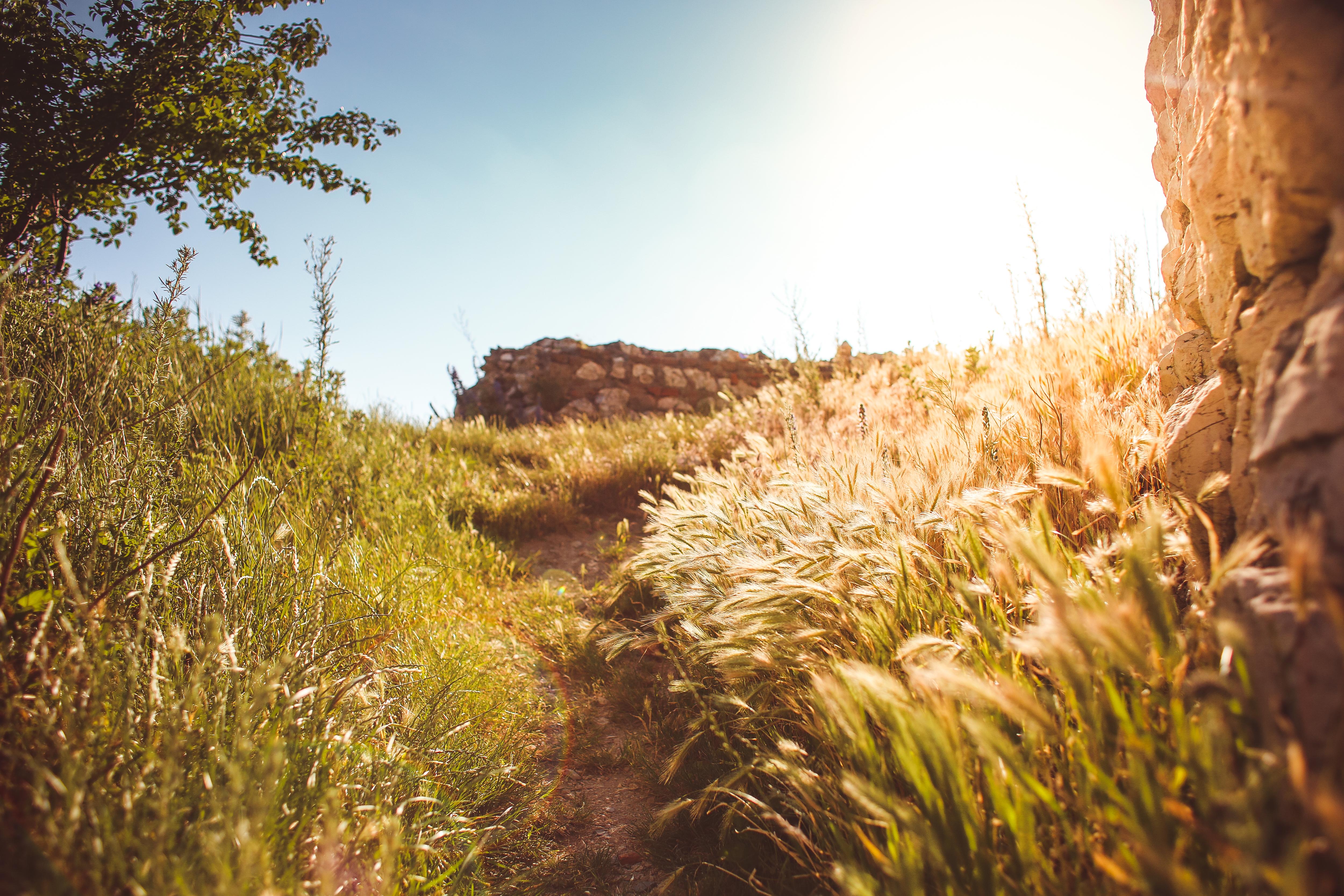long-path-in-grass-picjumbo-com